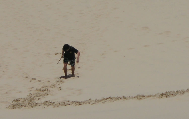 Sandboarding at Moreton Island, Brisbane (long way to climb up after the slide!), 2013.