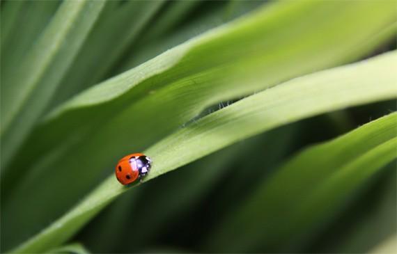 featured-ladybug-martin-lougas